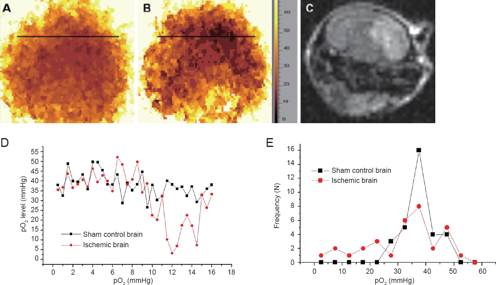 In vivo electron paramagnetic resonance oximetry and